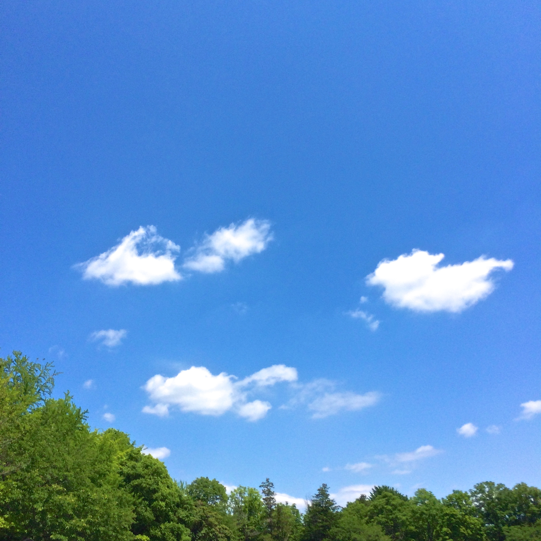 昭和記念公園上空の青空