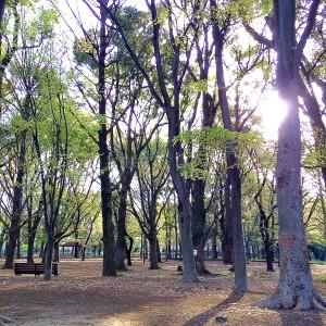 東京都立城北中央公園